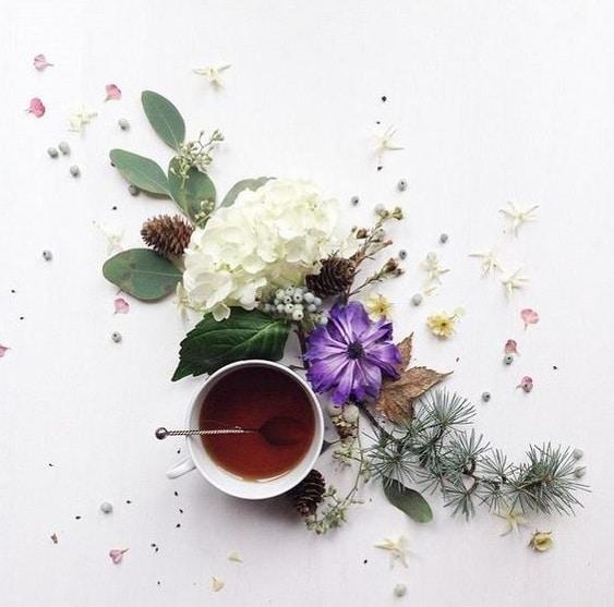 Tè: storia e caratteristiche di una bevanda ricca di virtù - Tè bianco