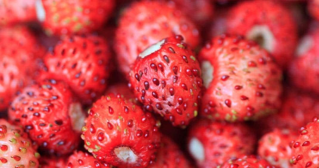 Frutti di bosco: virtù, proprietà nutrizionali, ricette - Fragoline di bosco