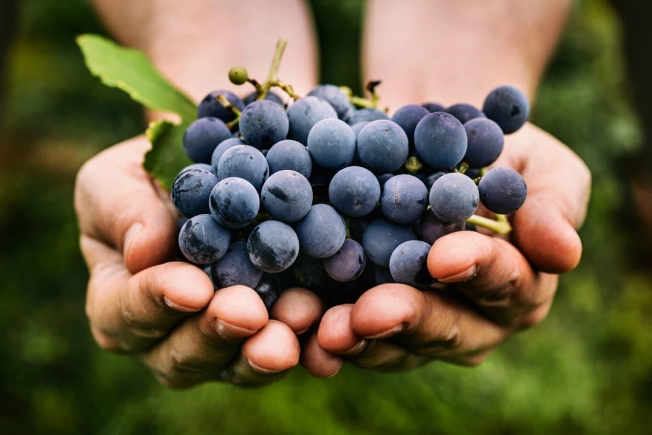 About Beauty alimenti che favoriscono il sonno - ricette naturali contro l'insonnia - Uva