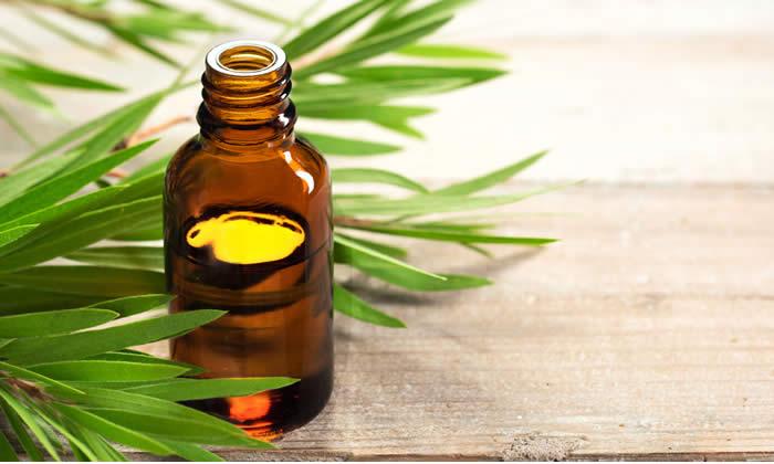 About Beauty Rimedi Naturali per Combattere l Acne TraTreeOil